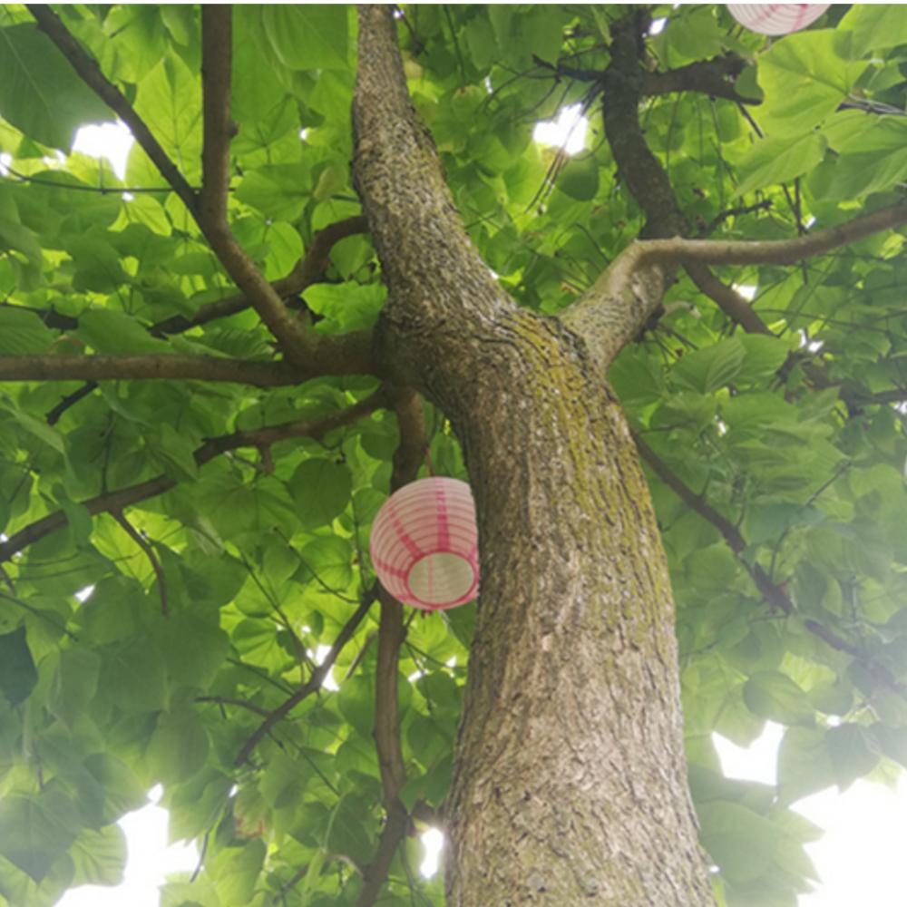 Liggend onder deze boom